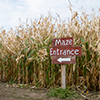 The Best Fall Activities near Waukegan, IL